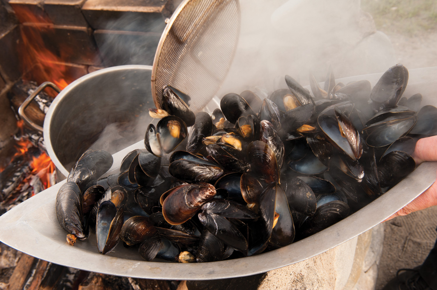 Photos - Mussels