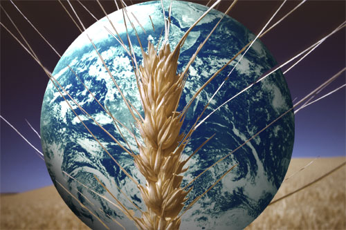 G20 Missed Boat On Food Security