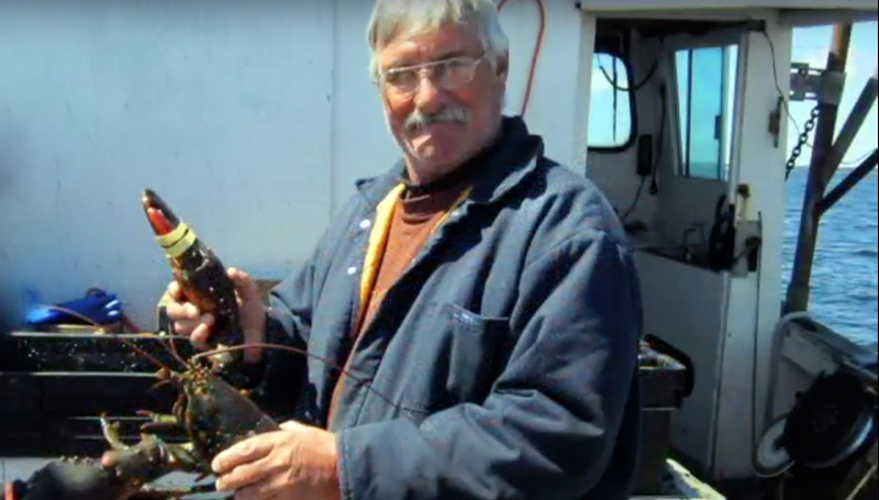 Photo - Lobster Fisherman holding lobsters on a ship in Nova Scotia.